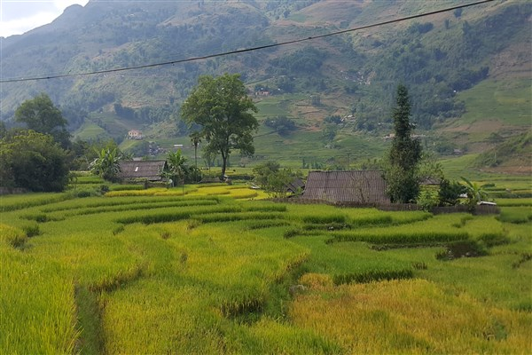 4 Incredible Terraced Fields in Vietnam