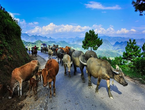 Vietnam tour to admire beautiful sceneries