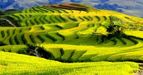 ST06: Highlights of Sapa Tour - 3 days / 4 nights
