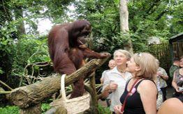 The Angkor Zoo