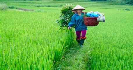 HLT09: Hanoi - Mai Chau - Ninh Binh - Halong - 4 days / 3 nights