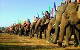 Elephent Racing Festival